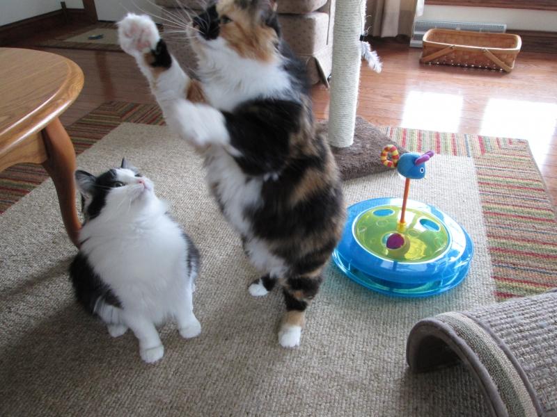Callie and Chloe