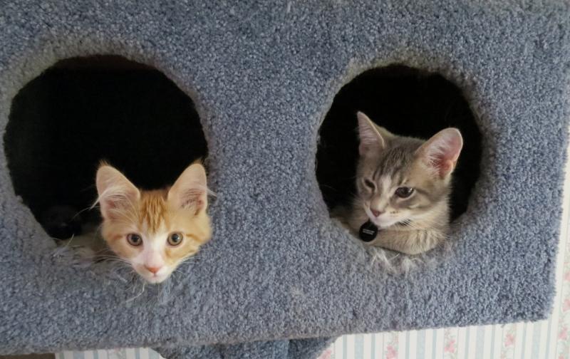 Harry and Bessie.jpg