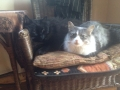 Bella and Rolly