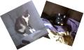 Hopper and Gambit.jpg