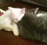 Levi and Cassius