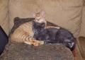 Murphy and PJ
