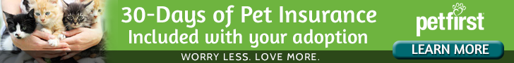 PetFirst's 30-day pet insurance plan is an offer available to every cat adopted from For Cat's Sake, regardless of age. This program ensures the pets you adopt are covered for accidents and illnesses.  The 30-day pet insurance reimburses 100% of vet bills incurred during this time up to $500 per incident after a $50 deductible, which can be a safety net for a pet parent to be able to afford an unforeseen medical emergency, rather than making the tragic decision not to treat.