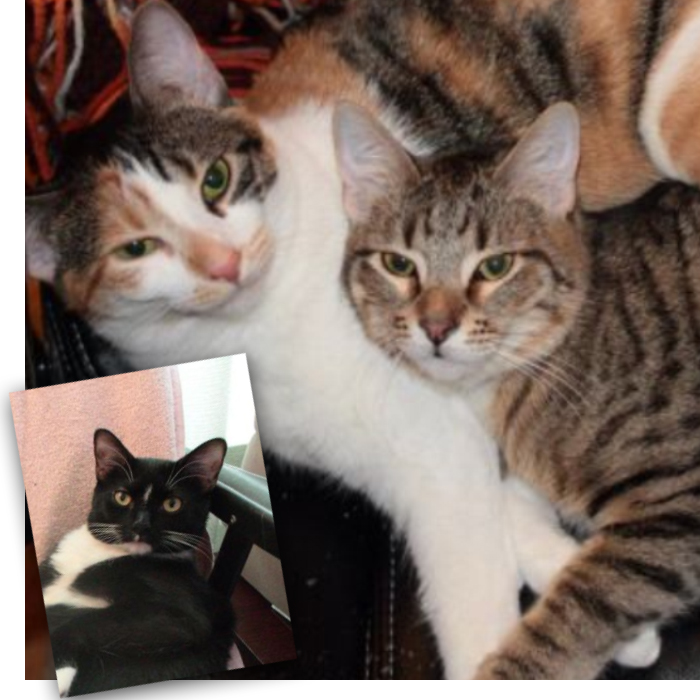 Joey, Rudy and Rinni (bonded trio)